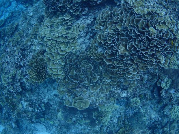 サンゴの眺め