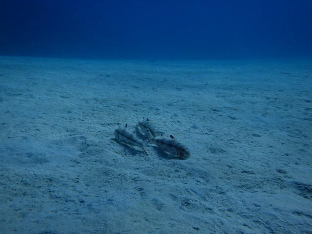晴れの日、真っ白な砂地のダイビングを振り返り!沖縄は今週後半雨続きに?