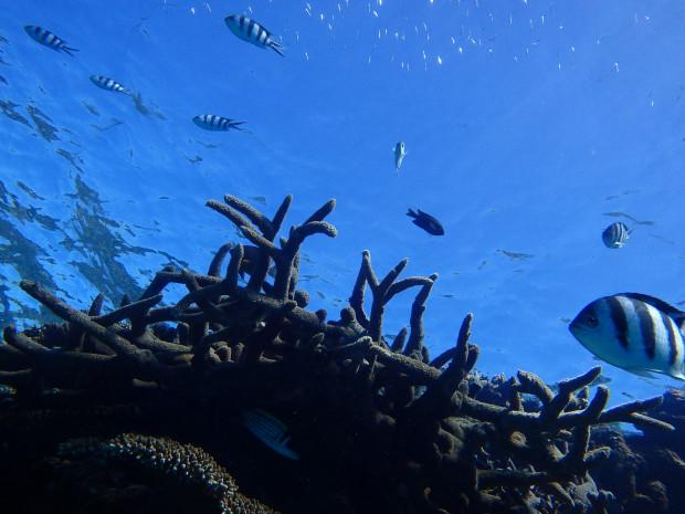 サンゴと空