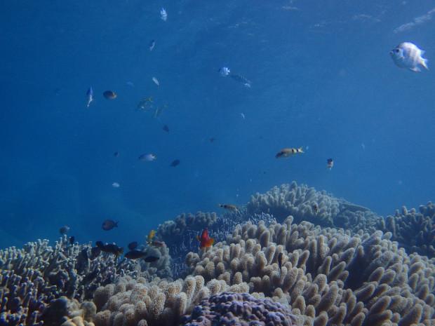 サンゴと魚