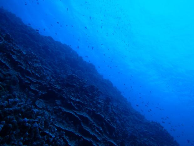 サンゴと魚影