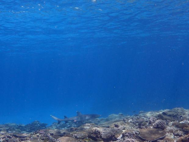 水面とサメ
