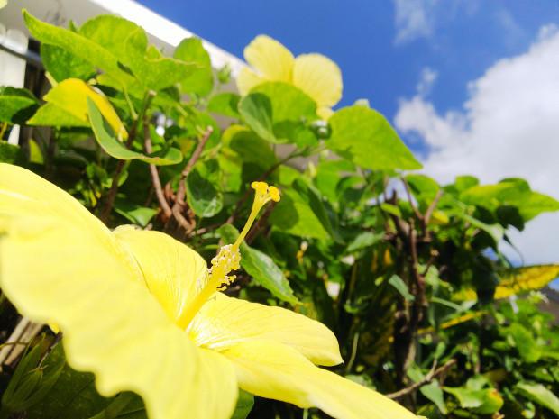 天気回復、爽やかな青空!沖縄本島沿いドリフトダイブでカマス大群に巻かれた思い出
