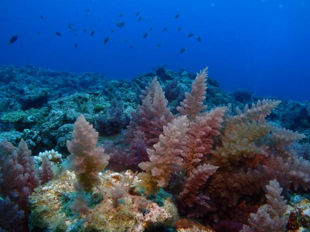 水温変わらず22度でも、水中の眺めは次の季節へ。水底一面にカギケノリ!沖縄4月の海