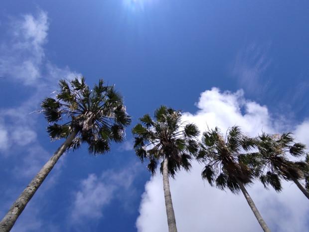 5月中旬・梅雨を忘れるような天気続きの那覇!吹き続ける南からの強い風