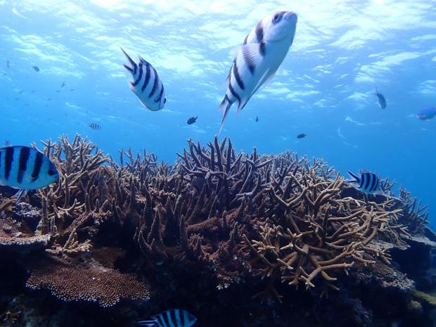 ダイバー大歓迎のサンゴ群生とロクセンスズメダイ!洞くつの青い眺めも
