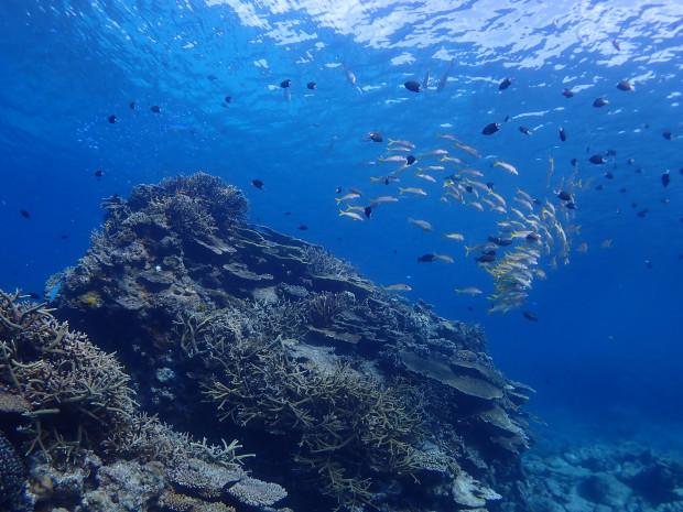 サンゴ群生と魚影!透明度最高のチービシ海域スタート、後ケラマ海域へ